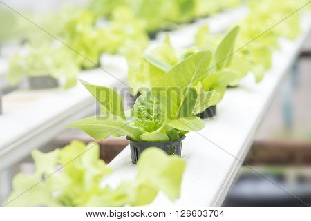 the hydroponic vegetable on the shelf with the equipment
