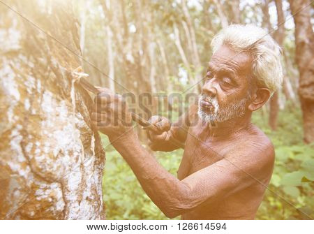 Man Tapping Rubber Tree Concept