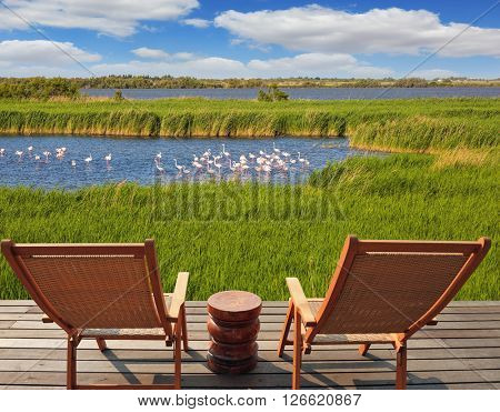 Park Camargue in delta of Rhone.  Flock of pink flamingos in the shallow lake. Comfortable lounge chairs on wooden platform for rest and  birdwatching