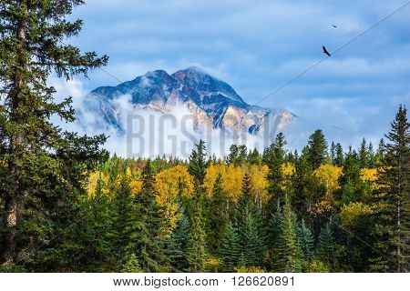 The evergreen forests, yellowed shrubs and distant mountains. Warm autumn day in Jasper Park, Canadian Rockies