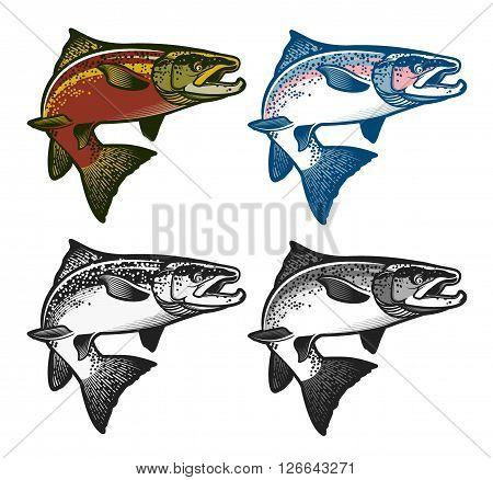 Salmon Fish - Vector Illustration. Logo Template. Vintage Salmon Fishing emblems, labels and design elements.  Vector illustration.