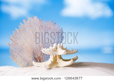 white starfish and seafan with ocean, beach, sky and seascape, shallow dof