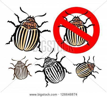 Colorado potato beetle isolated on a white background. vector illustration