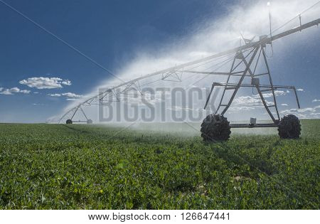 Center pivot irrigation system with sprinklers at work under sunrays Badajoz Spain