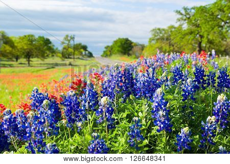 Texas Wildflowers Awash In Morning Sunshine