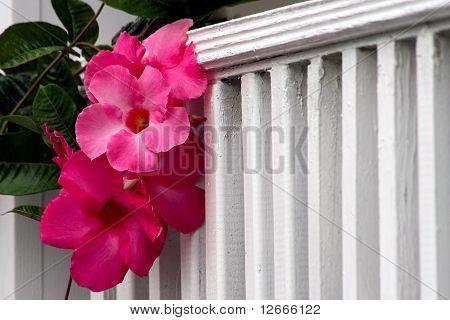 Gorgeous Pink Hibiscus