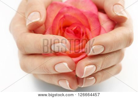 Woman hands with beautiful rose on white background, close up
