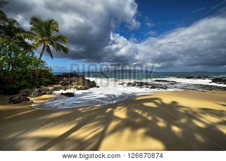 Shadows of palm trees at Secret beach, Maui, Hawaii, USA