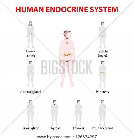 Human endocrine system. Man and woman silhouette with endocrine glands. icons set.