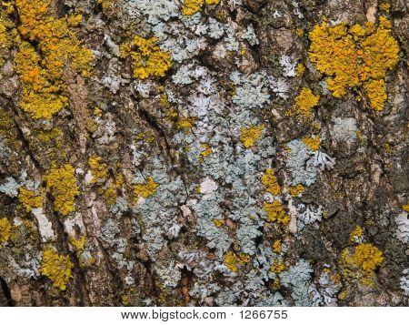 Organic Texture - Bark With Moss