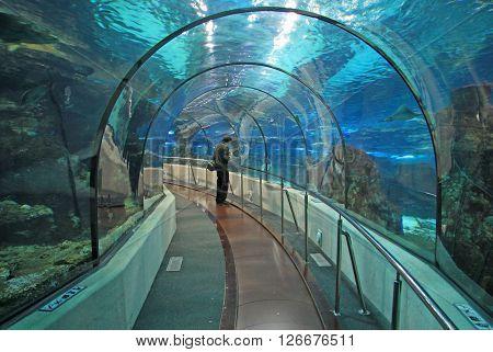 BARCELONA CATALONIA SPAIN - DECEMBER 14 2011: Transparent tunnel in Barcelona Aquarium in Barcelona Spain