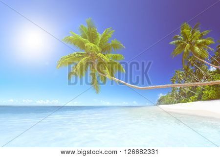 Scenic View Sea Shore White Sand Coconut Palm Trees Concept