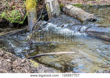 A closeup shot of deadwood logs and a stream at Dash Point State Park in Washington State.