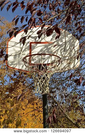 The autumn colors of leaves partially hide the outdoor basketball backboard, net, and rim.