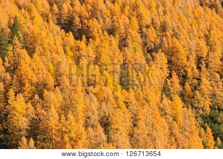 Autumn landscape from italian Alps. Yellow trees. Beautiful dolomites view