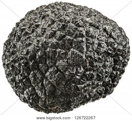 Black truffle. File contains clipping paths.