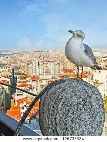 The bird watches the tourists sitting on the top of Galata Tower Istanbul Turkey.