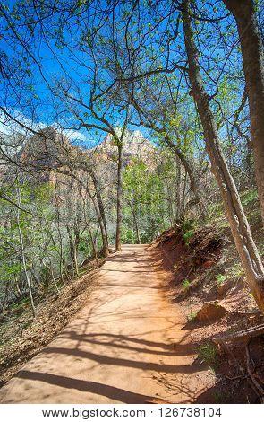 Long Walking Path