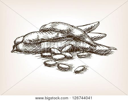 Beans sketch style vector illustration. Old engraving imitation. Beans hand drawn sketch imitation