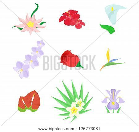 beautiful and bright set on the theme of flowers.