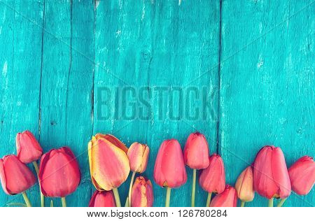 Frame Of Tulips On Turquoise Rustic Wooden Background. Spring Flowers. Spring Background. Valentine'