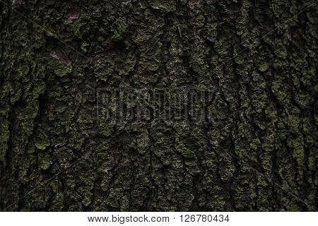 The Texture Of Mossy Oak Bark