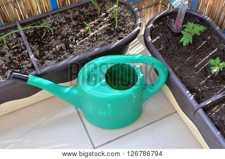 Green watering can and seedlings (tomato onion) in flower boxes as part of urban garden on the balcony