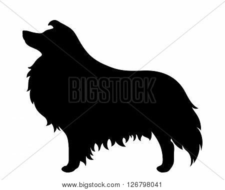 Vector black silhouette of a collie dog isolated on a white background.