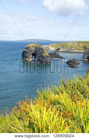 beautiful views of the virgin rocks with tall grass and flowers on the wild atlantic way