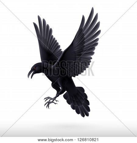 Aggressive black raven isolated on white background