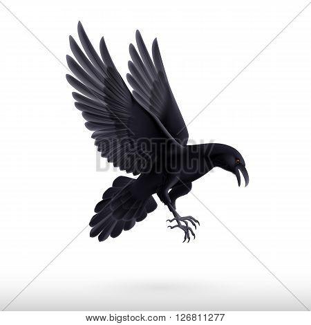 Illustration of flying black raven isolated on white background