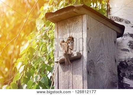 a bird a Sparrow a parent brought his bird with an insect in its beak in a bird house