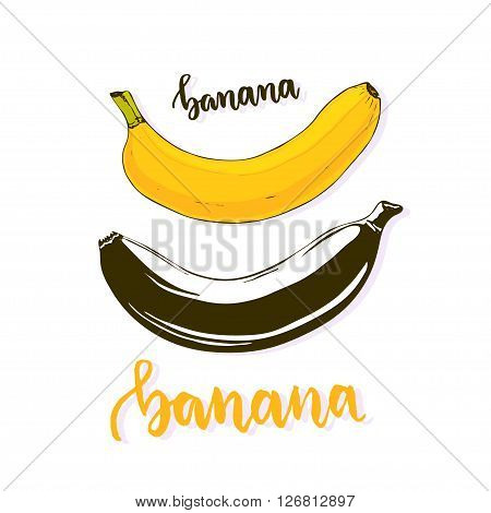 Banana isolated vector. Banana fruit silhouette and color. Cartoon banana vector icon stickers print or logo.