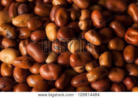 Raw Dry Organic Fava Beans