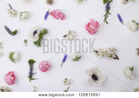 Heads of flowers : white anemones; pink tulips; white buttercups; violet veronica; blossom plum grape hyacinths on white background view from the top