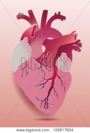 Vector Realistic Heart Illustration. Eps 10 isolated