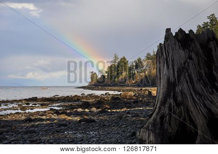 Rainbow in a blue sky, with trees, a large tree stump and beach in foreground.