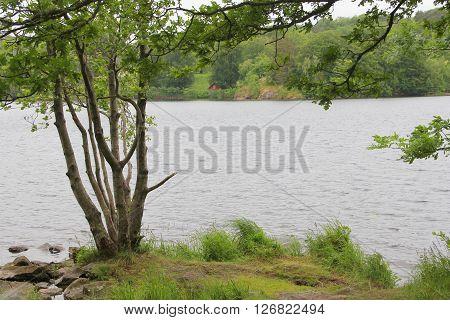 Beautiful landscape of Naas park Sweden, summer