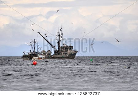 A large fishing trawler fishing for herring in the ocean.