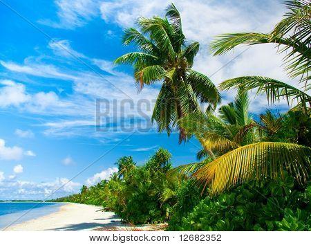palm hideaway