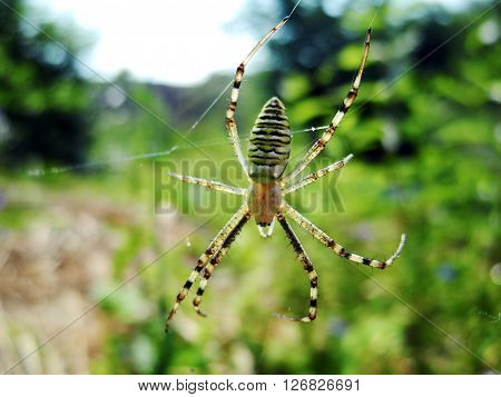 Beautiful image of spider on a spider web