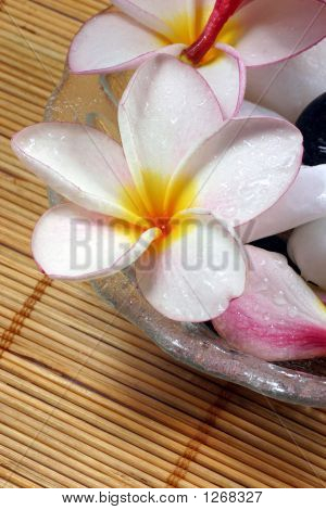 Frangipane Flower On The Rattan Background