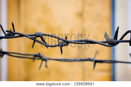 Closeup Of Barbed Wire Fence With Copyspace