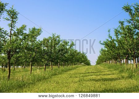 Green orchard on a clear day