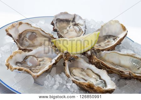 fresh French appetizer oysters on ice with lemon, for gourmets