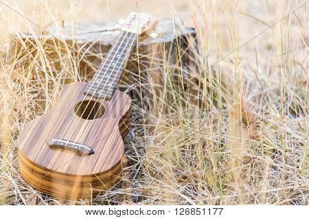 ukulele in vintage style on brown grass background