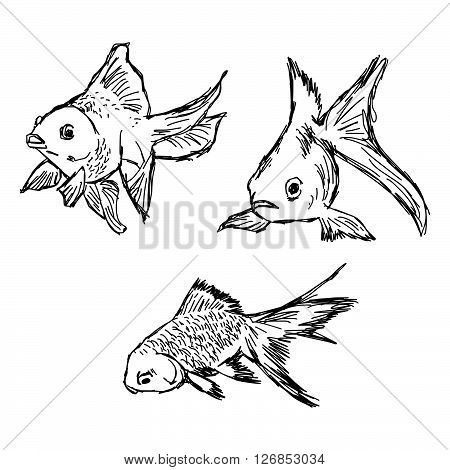 illustration vector hand draw doodles of gold fish set isolated on white background