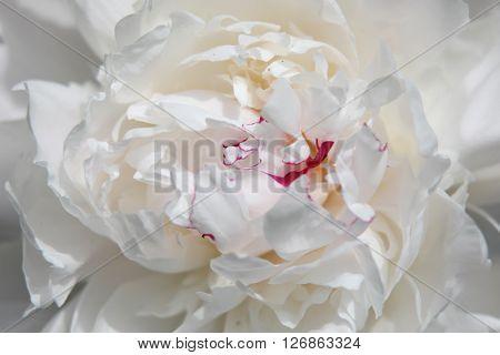 Close up shot of Magnolia