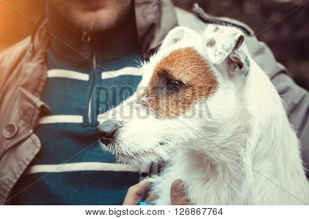 Cute Puppy Dog Jack Russel Terrier Dog