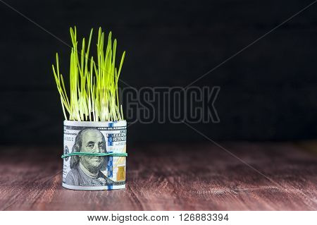 Investment growth: green grass and dollar bill. Financial concept.